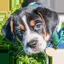 puppy-adopt