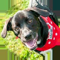 Adopt A Pet Greenville Humane Society Greenville Sc