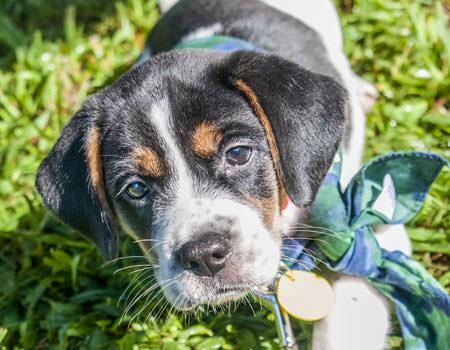 puppy-faq
