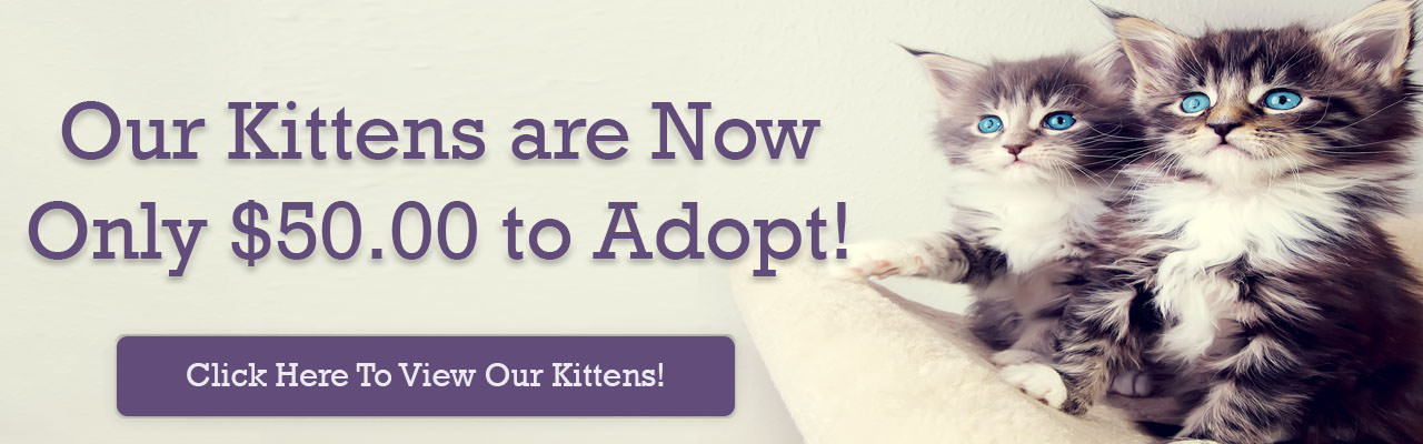 Kitten-Sale-Web-Slider