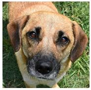 Adopt a Pet | Greenville Humane Society | Greenville, SC